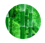 青竹  GREEN BAMBOO     【香调:花香调】