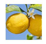 柠檬  LEMON  【香调:单一香型】